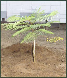 FHR en Rotary planten boom